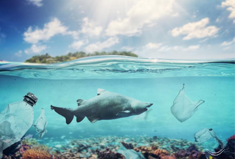 El imperio del plástico se desmorona